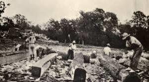 Belize slaves